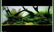 水草缸造景沉木水草泥化妆砂青龙石120CM尺寸设计33