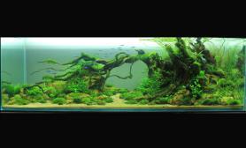 水草缸造景沉木水草泥化妆砂青龙石150CM及以上尺寸设计59