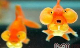 金鱼饲养的硬件设施