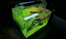 一个桌面小草缸  第一次用LED灯养草