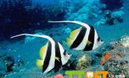 怎样选购海水观赏鱼