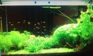 水草造景【赢阳光几何全光谱LED】我想有一口漂亮的缸