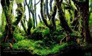 45小缸水草缸灌木丛林
