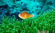 鱼的记忆可长达5个月