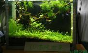 水草造景[五图片一]奉献小草缸《蜕变》