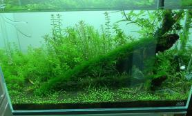 新年好鱼缸水族箱原创ADA 60×30×36草缸《春意》