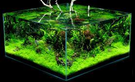 水草造景方缸四面欣赏