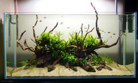 沉木青龙石原生态鱼缸25
