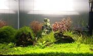 水草造景这样的缸可以参赛吗?