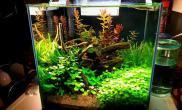 水族箱造景绿色的草缸很养眼鱼缸水族箱