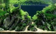 好美的石景缸水草缸这些鱼儿们要幸福死了