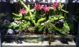 水陆缸造景图片欣赏