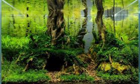 水草缸造景沉木水草泥化妆砂青龙石60CM尺寸设计43