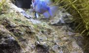 各位大神水草缸藻太少会饿死螺吗