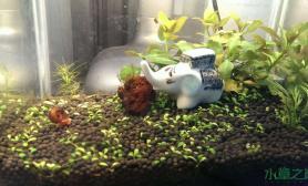 水草造景又一大作~ 吃红土的大象鱼缸水族箱