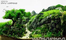 水草缸造景沉木水草泥化妆砂青龙石45CM及以下尺寸设计45