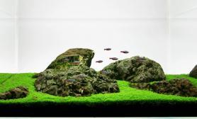水草缸造景沉木水草泥化妆砂青龙石60CM尺寸设计75