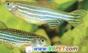 硬骨鱼(多图)