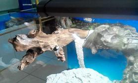 鱼缸造景大家帮忙参考一下如此骨架搭配什么水草好