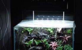 水族箱造景32cm水陆缸