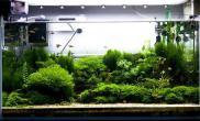 草缸除丝藻