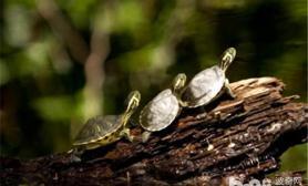 刚出生的小水龟应该怎么养
