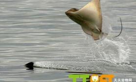 常见淡水鱼种类大全