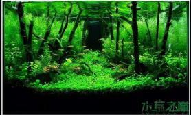 [求助]求造景素材分解及造景步骤鱼缸水族箱