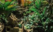 Rnkot新作雨林50CM生态缸