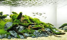 80cm水草缸造景青龙石MOSS珊瑚莫斯