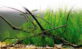 水草缸造景沉木水草泥小树枝青龙石60CM