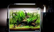 市面上超白鱼缸定做品牌及其超白玻璃鱼缸的优点