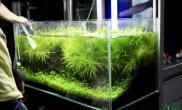 状态叼翻天的箦藻~