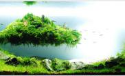 Aquascape of the Month August: