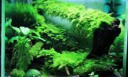 【水草造景篇】:密林
