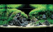 水族箱造景我喜爱的草缸5
