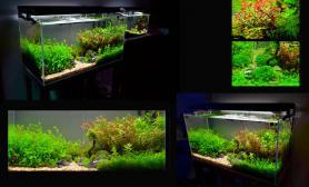 """我的90 45 45一年四个月了水草缸取名叫""""时熏""""鱼缸水族箱"""