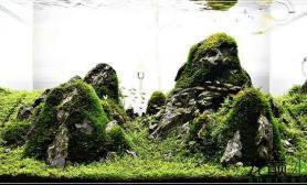 莫丝、迷你矮水草缸60*45*45小超白水草缸青龙石简易开缸成景照