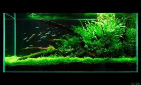静享绿色生活鱼缸水族箱