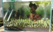 新开缸(二)水草缸挖耳前景水草缸请提改进意见鱼缸水族箱