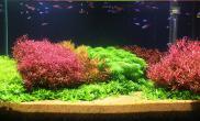 水质对水草发色的重要性