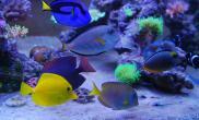 水果的自然水陆生态缸海的世界