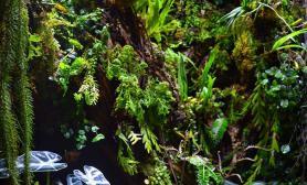 精彩作品集雨林梦2016雨林生态缸100CM及以上非标尺寸草缸