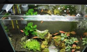 那一抹绿水草缸再辛苦也值鱼缸水族箱鱼缸水族箱鱼缸水族箱