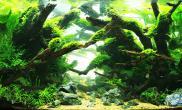 国内水族店水草缸造景北京尺寸设计首位水族