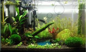 水草造景上上自家的小草缸吧