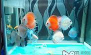 二氧化氯消毒鱼缸的用法及用量