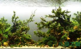 水草造景水草缸造景图片