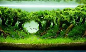 ADA参赛作品林间120CM草缸造景