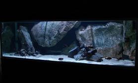沉木青龙石原生态鱼缸16
